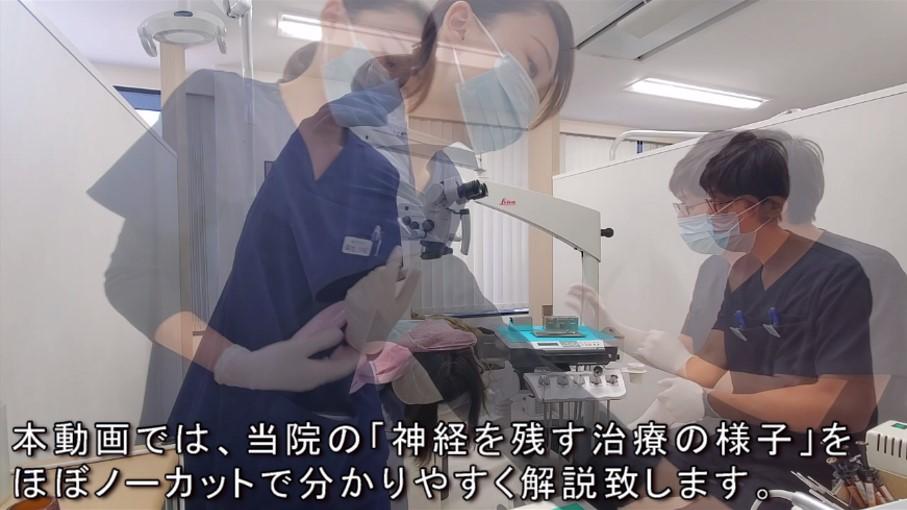 マイクロスコープ 神経を残す治療 動画で説明 ノーカット