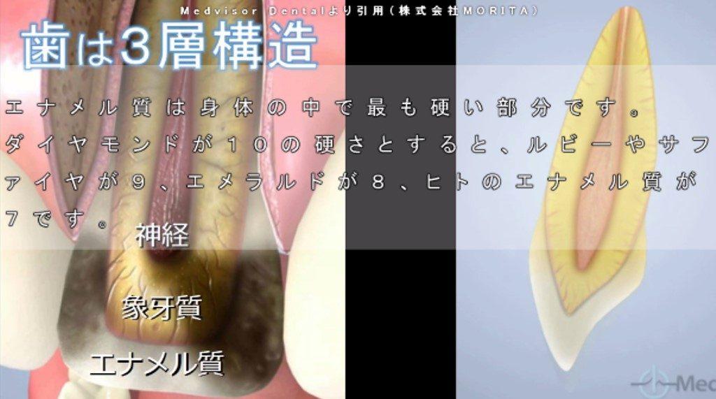 歯の構造 エナメル質の硬さ 歯の神経